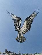 полет птица.